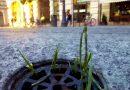 Na Piotrkowskiej coś się dzieje, jesień już za progiem, a tu rodzi się, rośnie coś